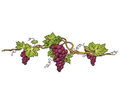 Hunter Valley Wines Vineyard - Petersons Wines