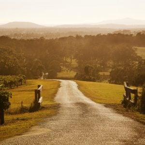 Hunter Valley Wines Vineyard - Petersons Wines